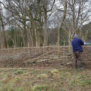 mank laying hedge